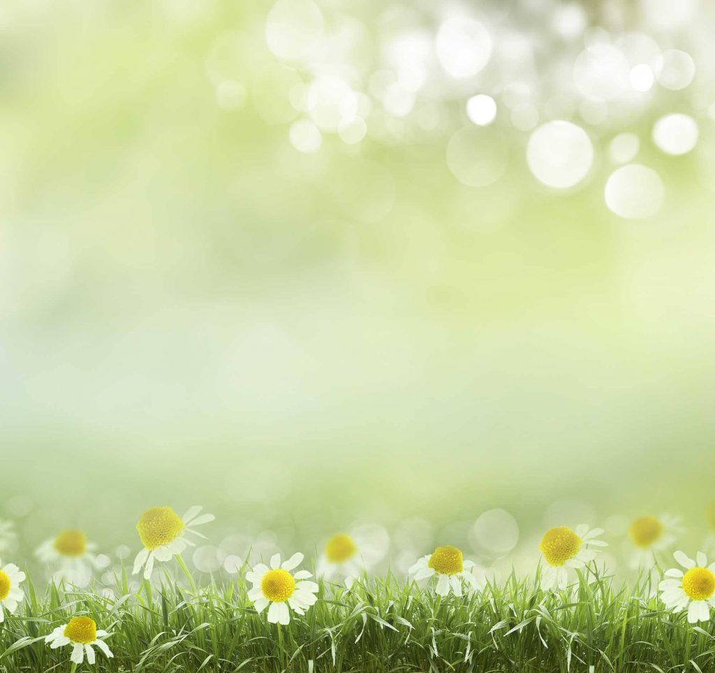 background màn hình led khung cảnh mùa xuân
