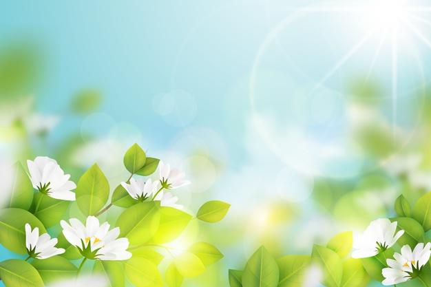 background màn hình led khung cảnh mùa xuân có nắng